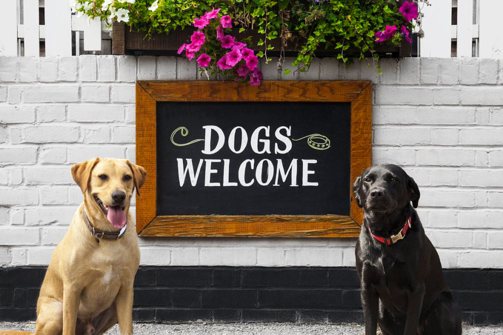 Dog Friendly Hotel in Trinidad Colorado