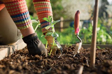 garden hands