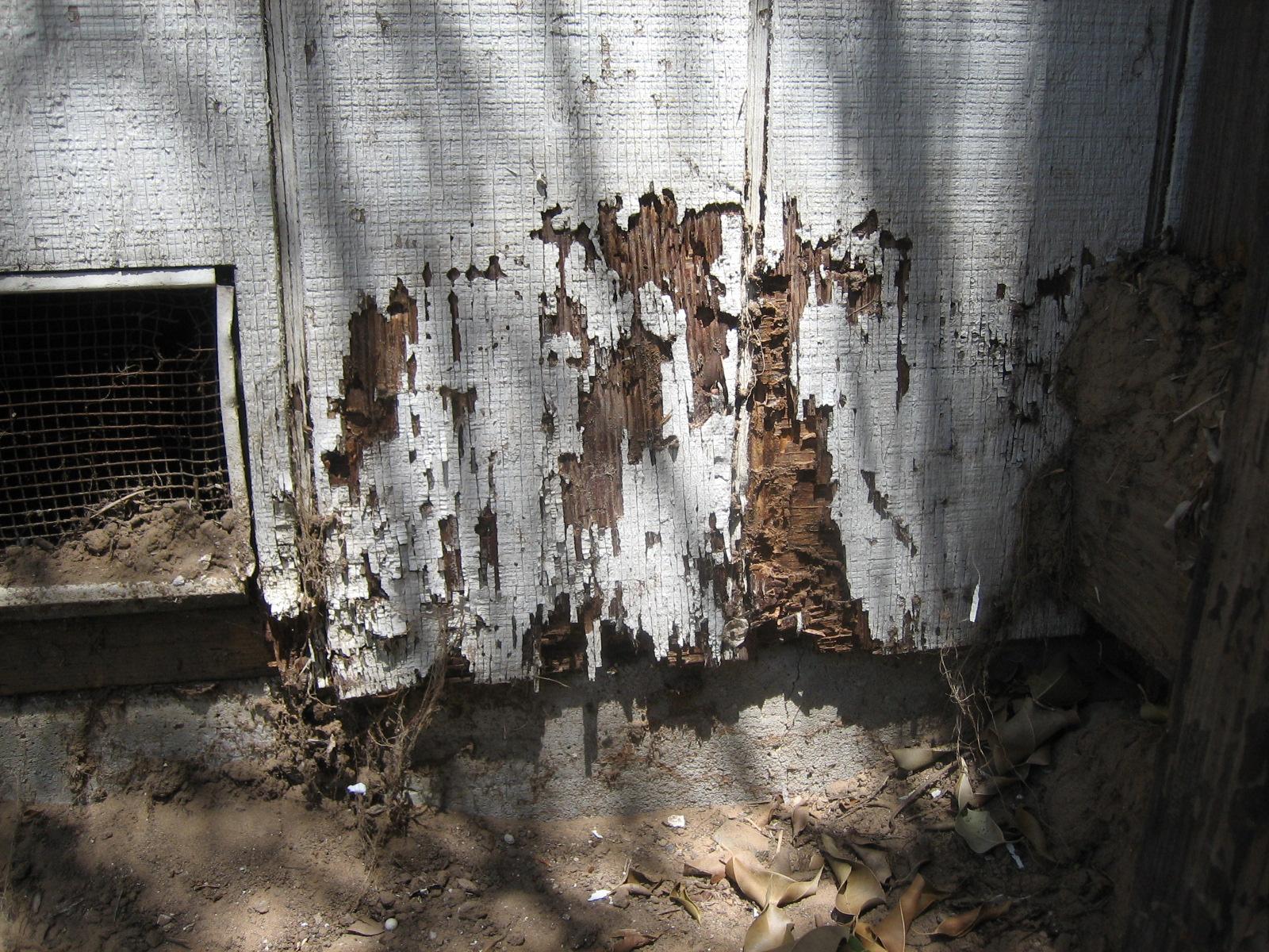 termite control - termite control page