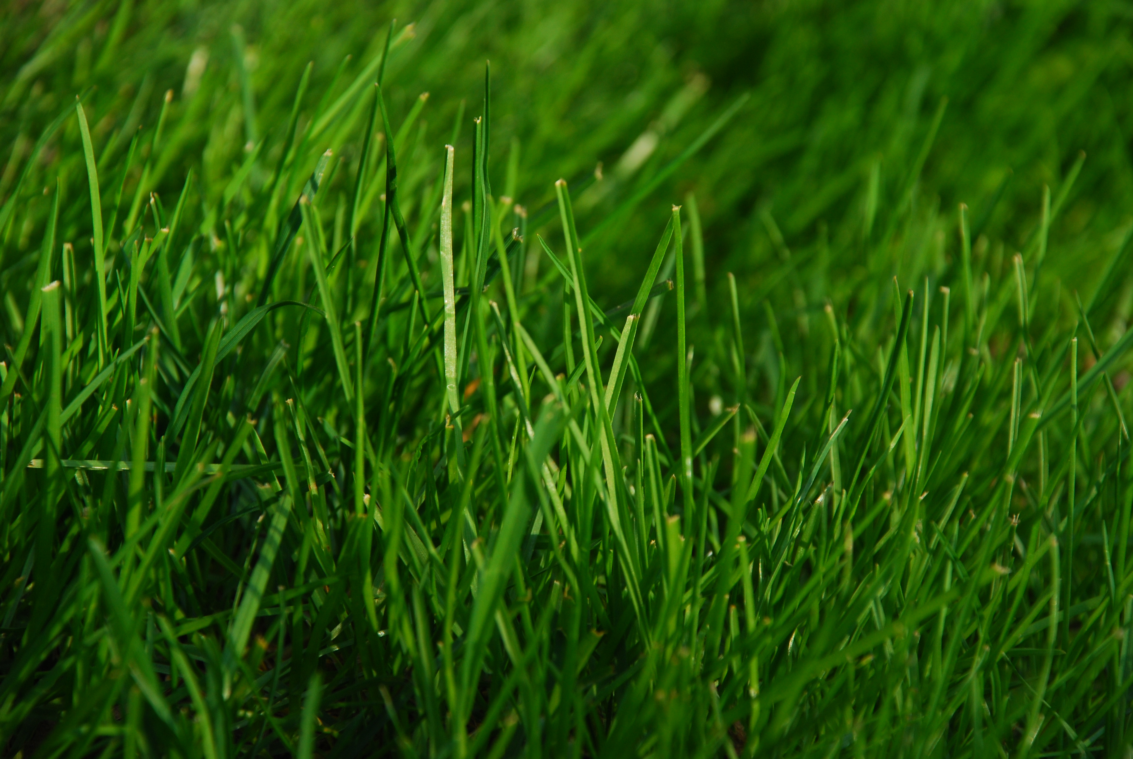 green lawn - grass maintenance page