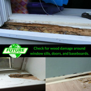 Termites will target any wood available