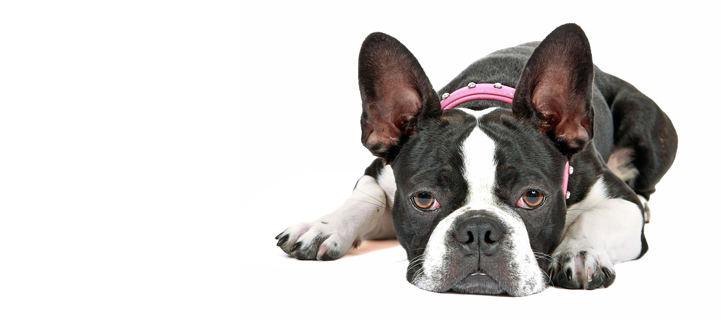After-Hours Urgent Care for Dogs and Cats