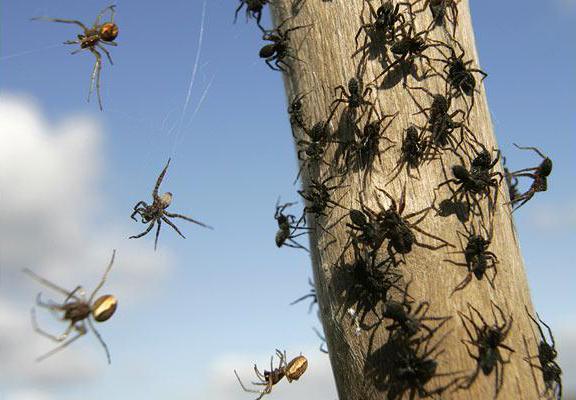 Spiders Sacramento