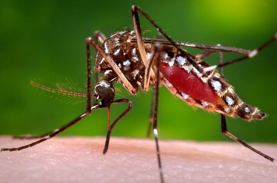 California Mosquito Populations Increase Ten-Fold