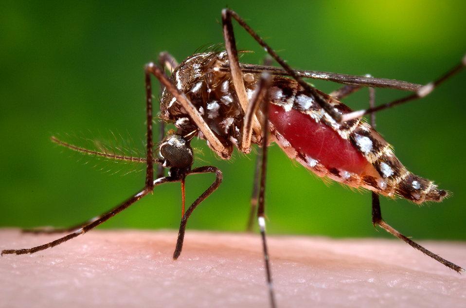 California Mosquito Populations Increase Ten-Fold