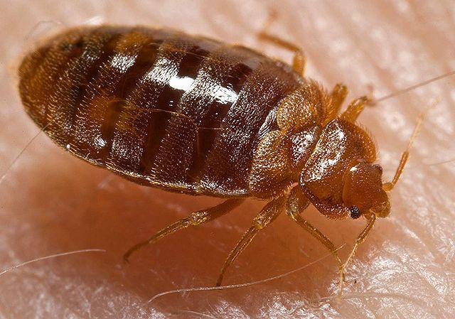 Bedbugs Infest Walmart