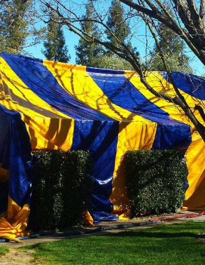 Tenting for Dry Wood Termites
