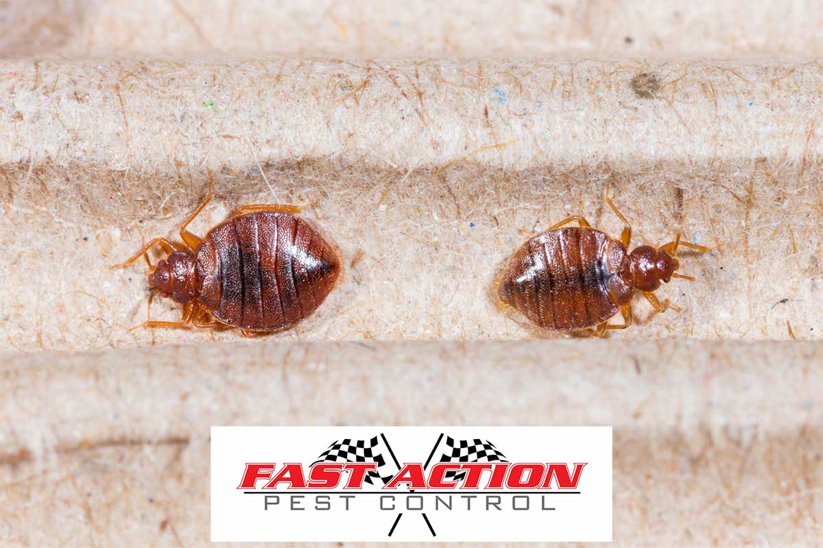 6 Early Signs of Bed Bugs Everyone Should Look Out For