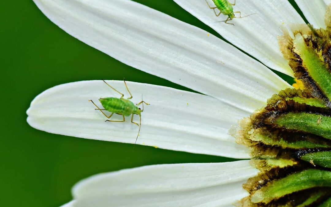 6 Most Common Pests and Plant Diseases