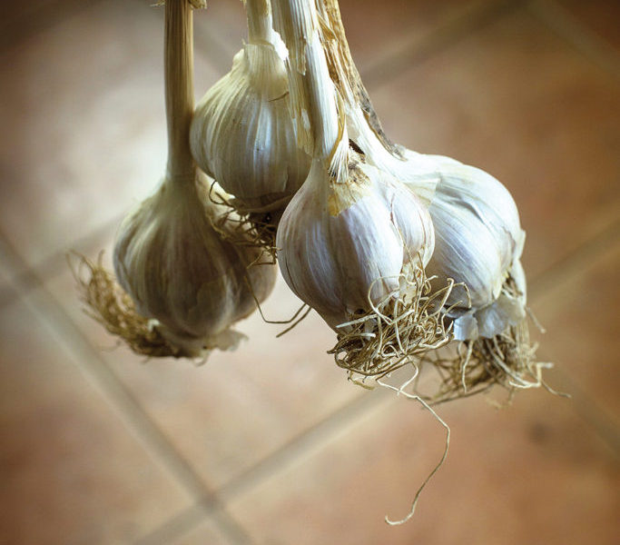 Dunridge-Farm-garlic