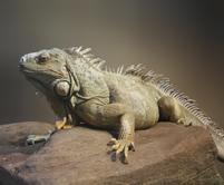 Photopage-reptile