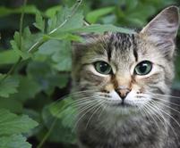 photopage-cat 4