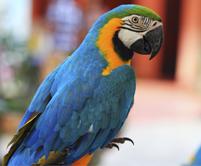 photopage-parrot
