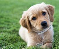 photopage-puppy 6