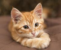 phptopage-kitten 3