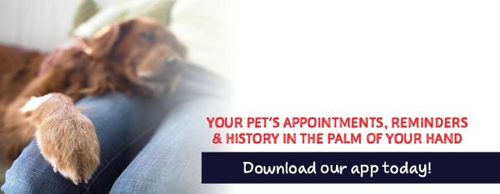 Download Our PetDesk App