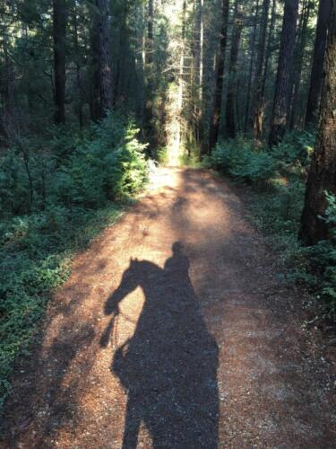 Shadow of a horse in the forest