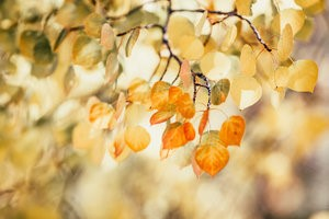 Hope For Changing Seasons