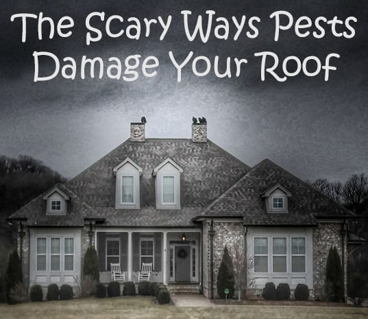 Scary Roof Damage From Pests Russ Noyes Roofing