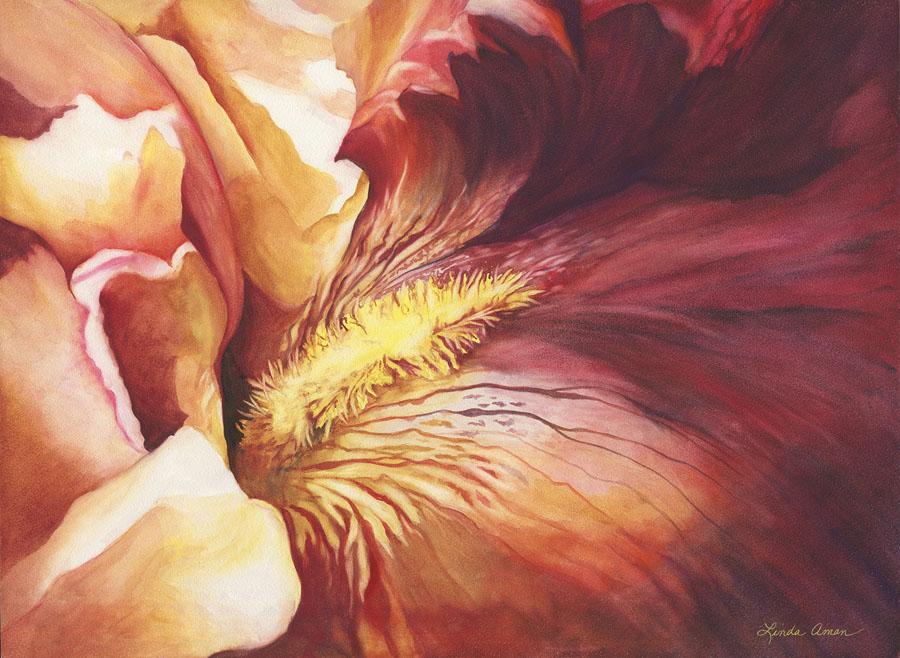Coral Iris