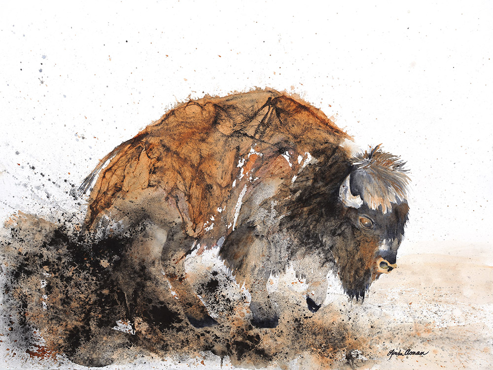 Bison Original Watercolor - Fine Art Print