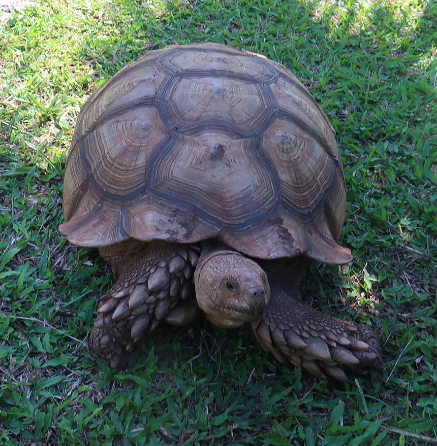 Visit the tortoise ranch