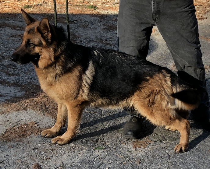 Anna German Shepherd Breeder