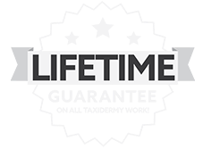 Lifetime Guarantee On All Taxidemy Work