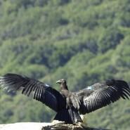 10 Species Of Endangered Birds Around The World