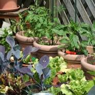 Top 5 Herbs for your Indoor Kitchen Garden