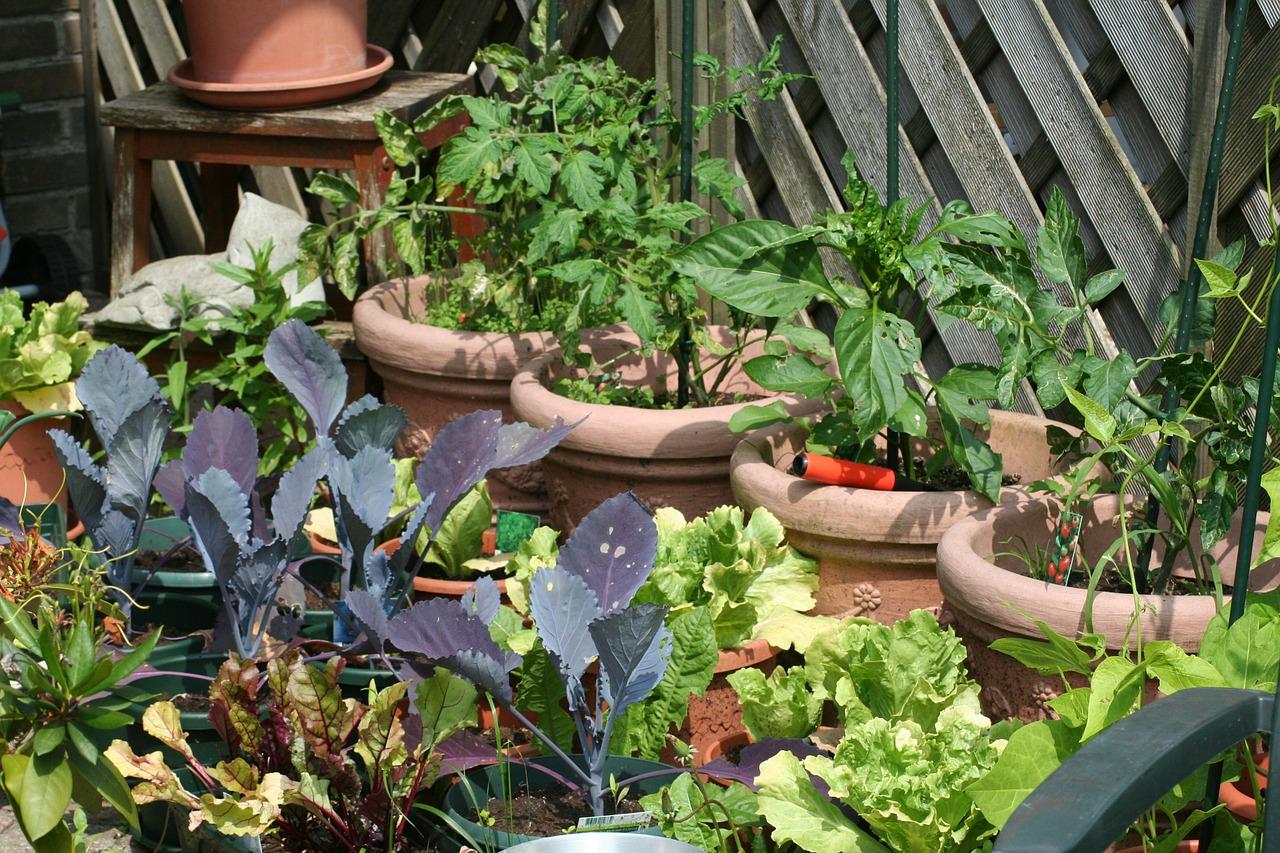 kitchen-garden-255404_1280