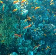 Environmental Impacts of Ocean Fishing & Fisheries