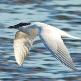 Migratory Birds & Natural Tourist Spots of Bangladesh