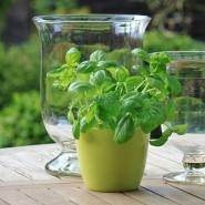 Grow a Sustainable Herb Garden Indoors