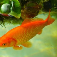 5 Facts about Aquaculture & Farmed Fish That Everyone Should Know