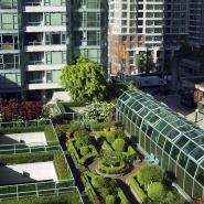 Urban Farming for a Great Green Future