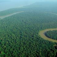Could our Rainforests be Wiped Out in 40 Years?