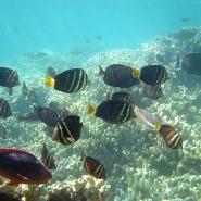 Could Indoor Fish Farming be the Future of Aquaculture?
