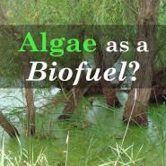 Algae as a Potential Source of Alternative Biofuel