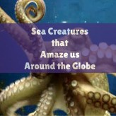 Sea Creatures that Amaze us Around the Globe