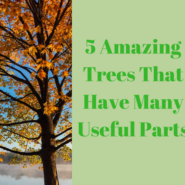 5 Amazing Trees That Have Many Useful Parts