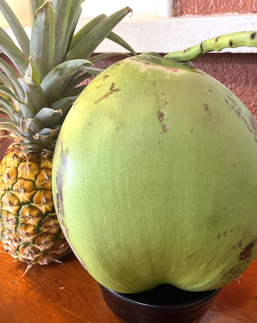 coconuts pineapple