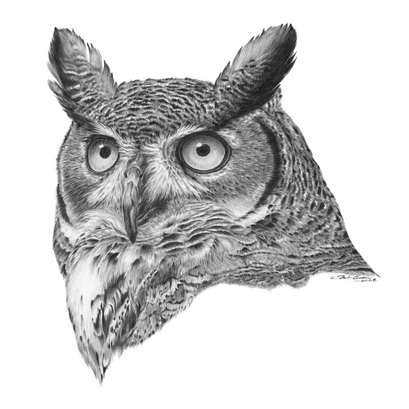 Giclée print of an original pencil drawing of a Great Horned Owl by Patrick Gnan.