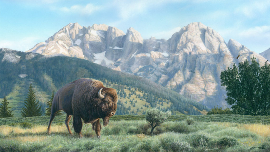 Acrylic painting of a Bison and the Grand Tetons at Jackson Hole.