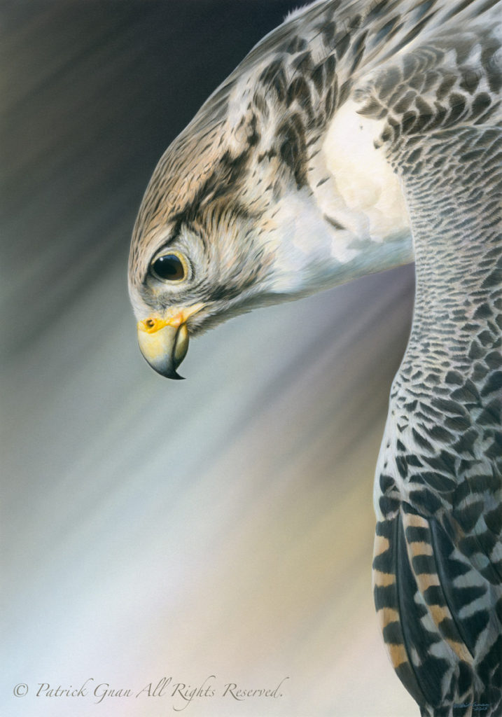 Original acrylic painting of a Gyr Falcon by Patrick Gnan