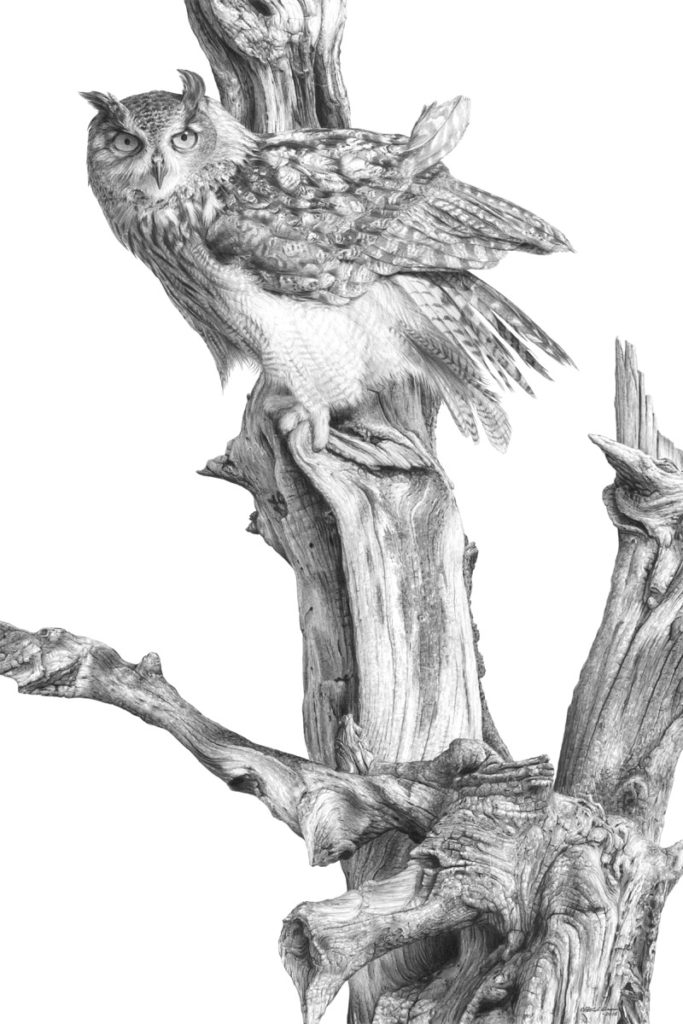 Giclée print of an original pencil drawing of an Eagle Owl by Patrick Gnan.