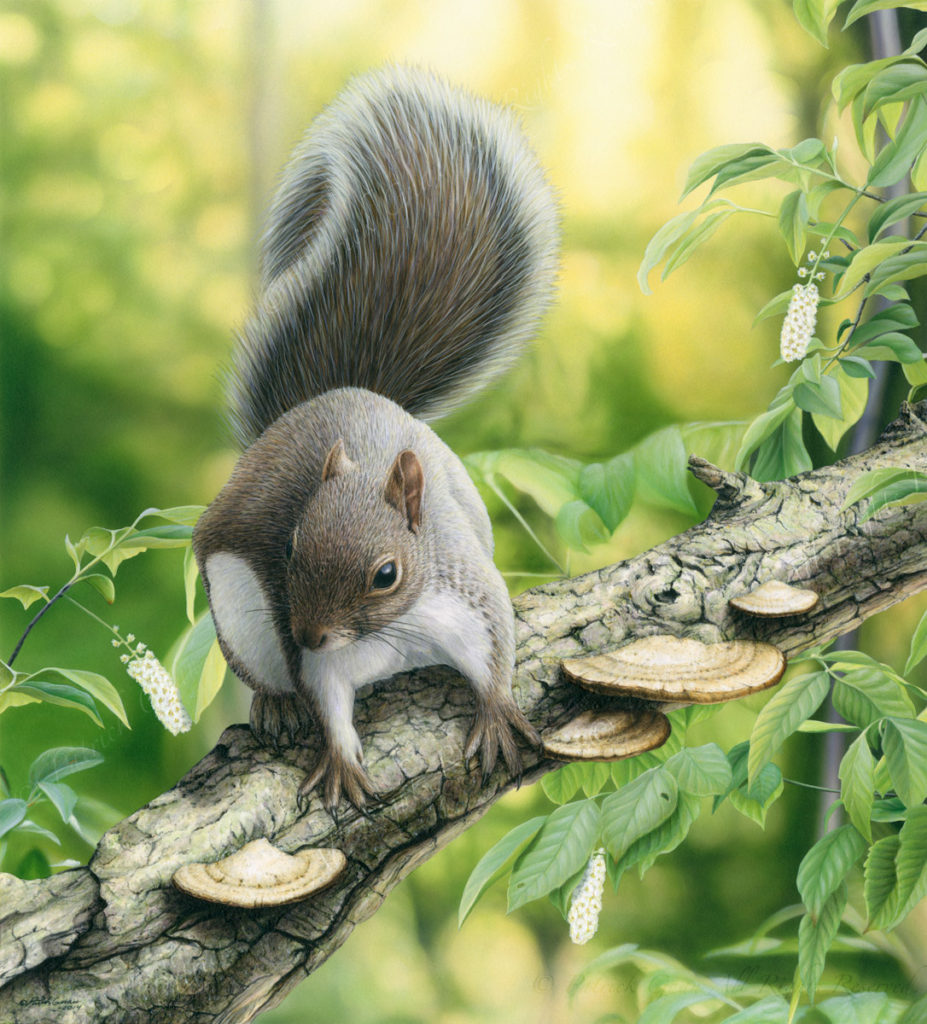 Giclée print of an original acrylic painting of a Gray Squirrel by Patrick Gnan.