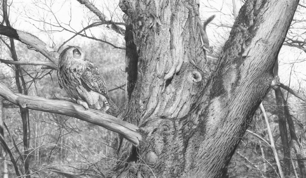 Giclée print of an original pencil drawing of an Eagle Owl and two squirrels by Patrick Gnan.