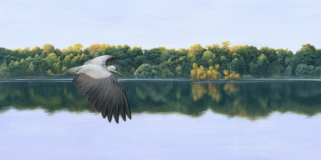 Acrylic painting of a Heron flying by the waters edge by Patrick Gnan.