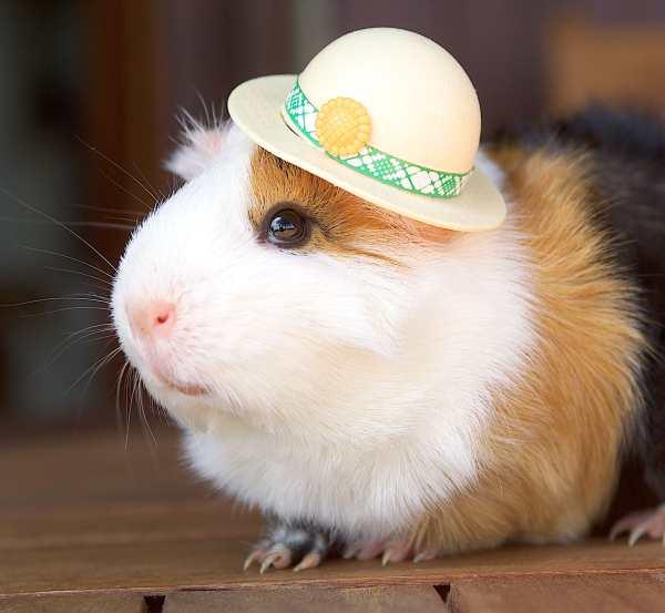 It Feels Good - Hamsters